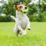 15 trucs faciles pour bien entretenir la pelouse