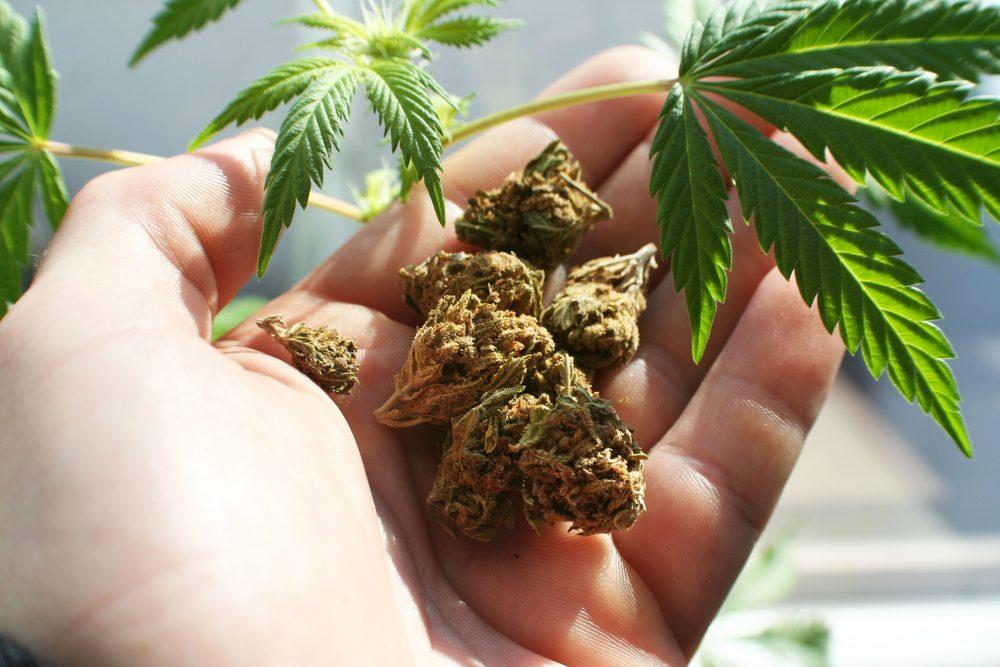: La marijuana ne guérit pas le cancer