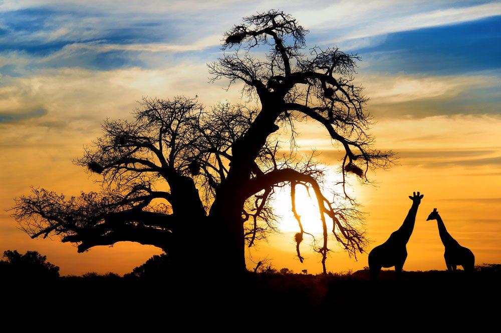 L'Afrique est un pays