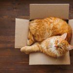 Votre chat aime les boîtes: découvrez pourquoi