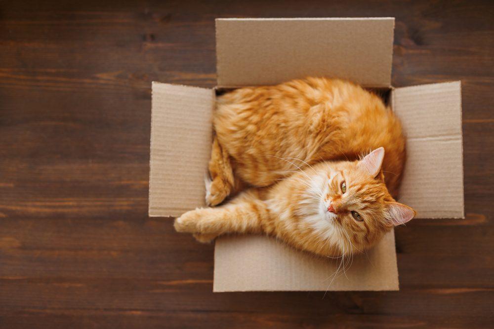 Découvrez pourquoi votre chat aime autant les boites.