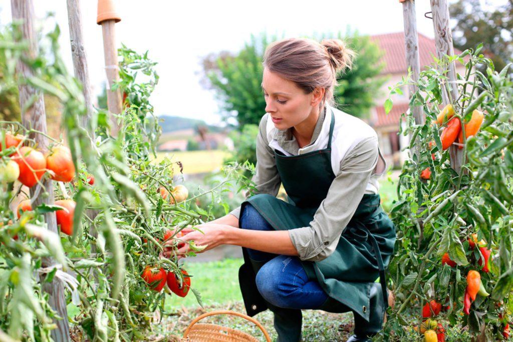 Le jardinage offre la possibilité de bruler jusqu'à 250 calories par heure.