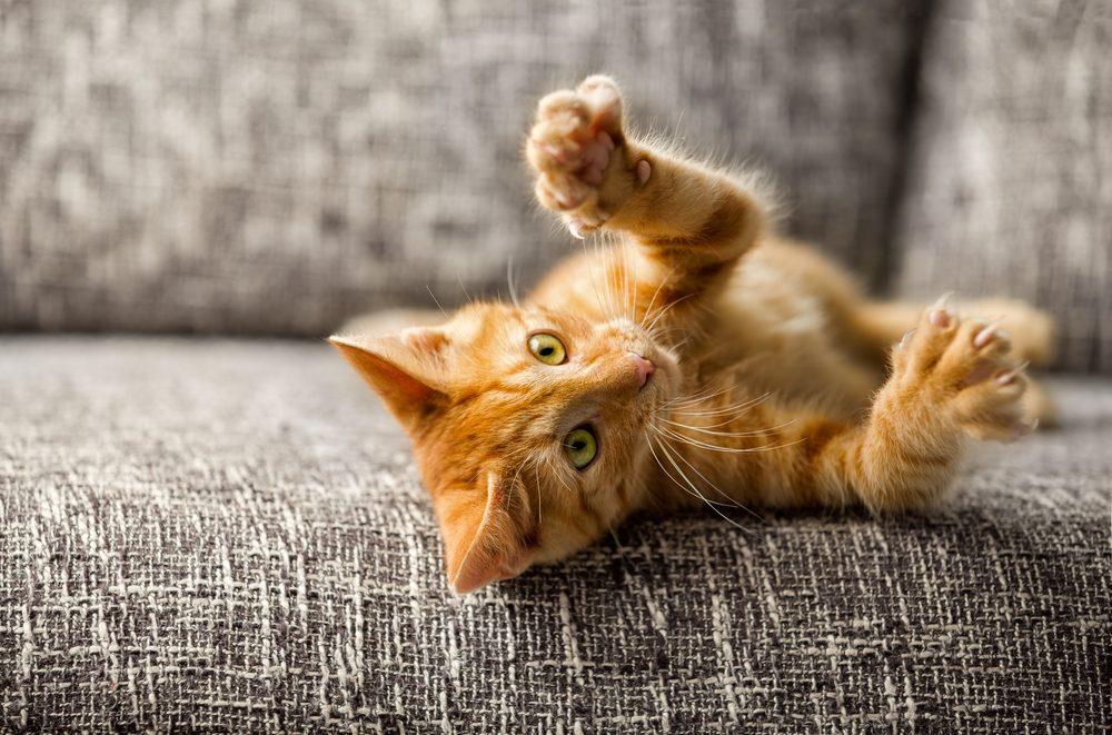 Dormir avec votre chat pourrait entrainer des comportements territoriaux.