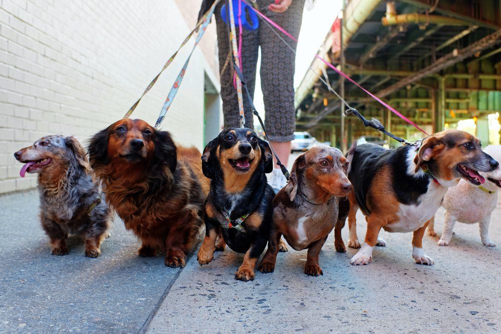 Votre nouveau chien sera différents des autres