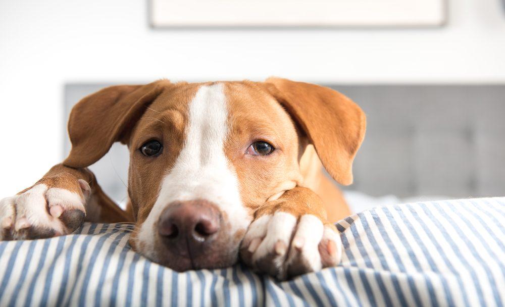 Un chien adopté peut être malade