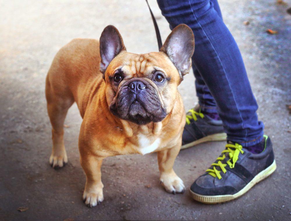 Vous aurez besoin d'un permis pour votre nouveau chien