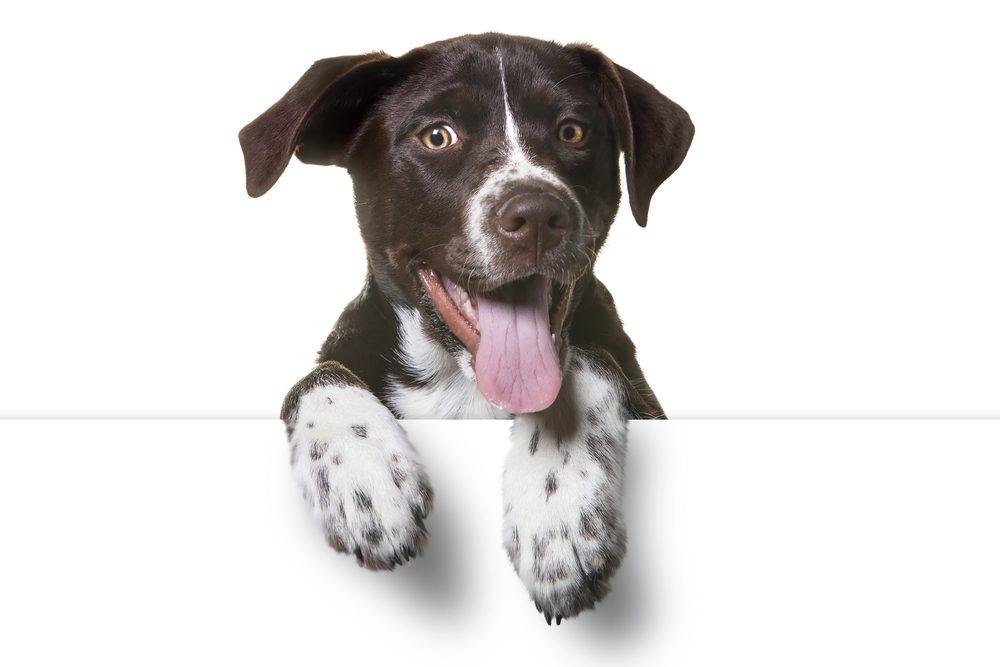 Vous risquez de ne pas connaitre la race de votre nouveau chien