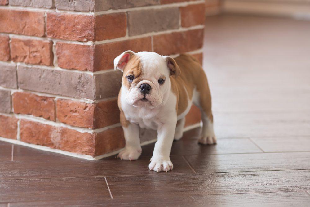 Lorsque vous adoptez un chien, il aura sans doute peur au début