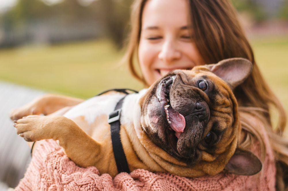 Prenez le temps d'apprivoiser votre nouveau chien