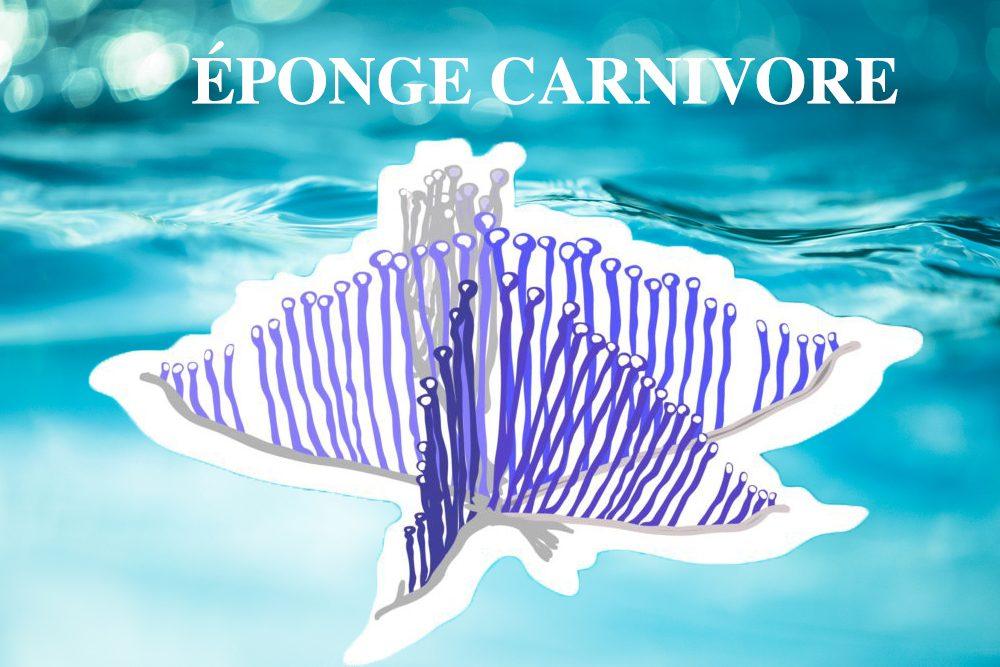 L'éponge carnivore