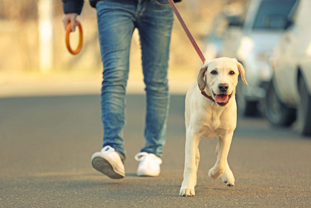 Il faudra entrainer votre nouveau chien