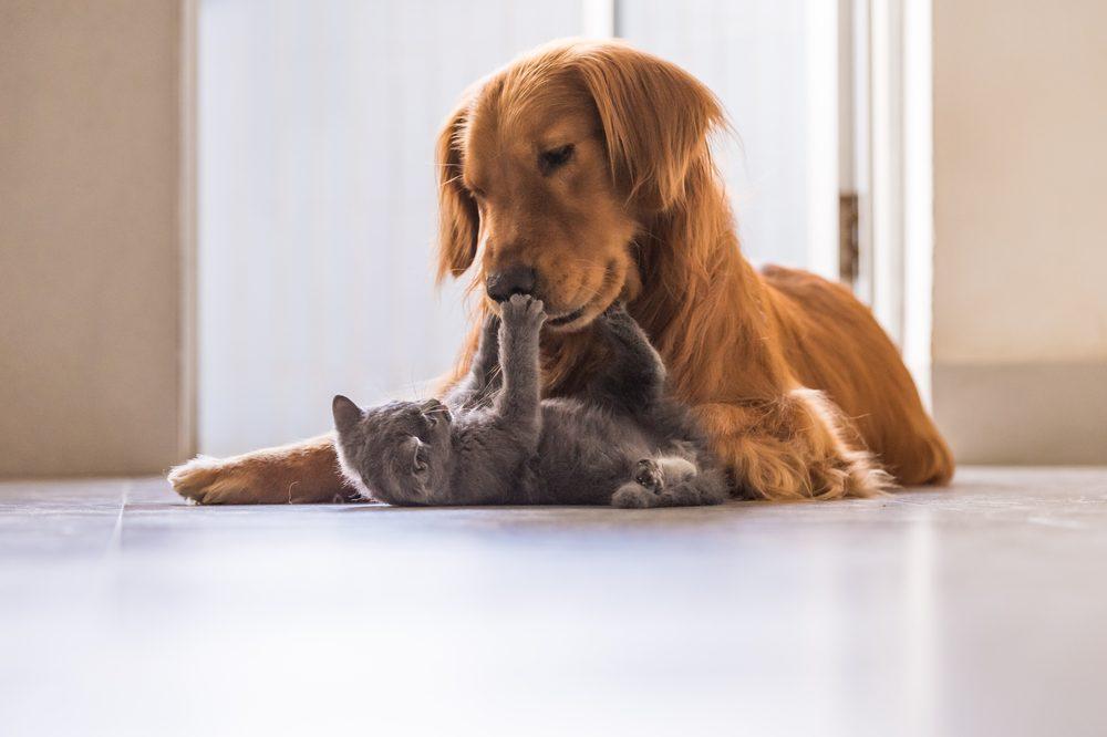 Votre nouveau chien pourrait ne pas s'entendre avec vos animeaux