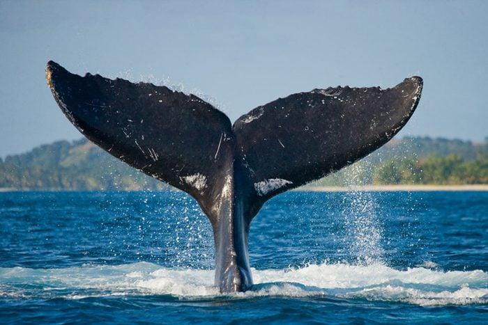 La route des Baleines, Côte-Nord du Québec : un road trip majestueux