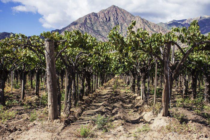 L'argentine est le plus gros exportateur de vin du continent américain et produits d'excellents cépages comme le malbec et le chardonnay.