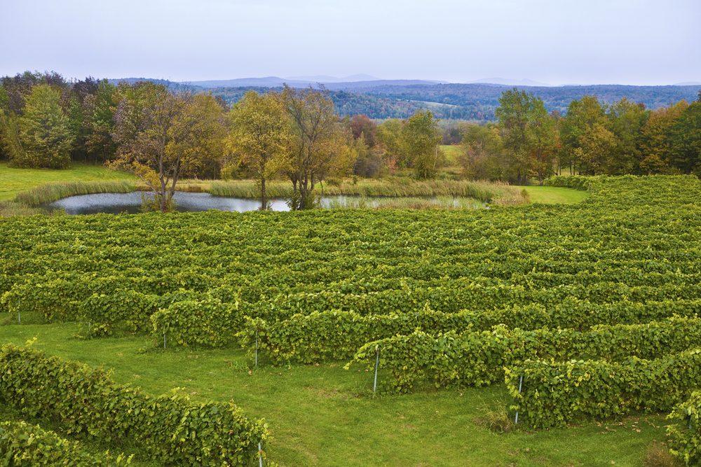 Un «road trip» au Canada permet de grandes découvertes sur le vin, avec entre autre un arrêt dans la célèbre Vallée de l'Okanagan.