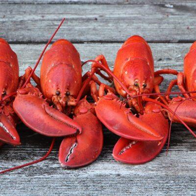 Le homard a-t-il une vie sexuelle?