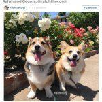 Animaux: 12 comptes Instagram trop adorables à suivre ABSOLUMENT