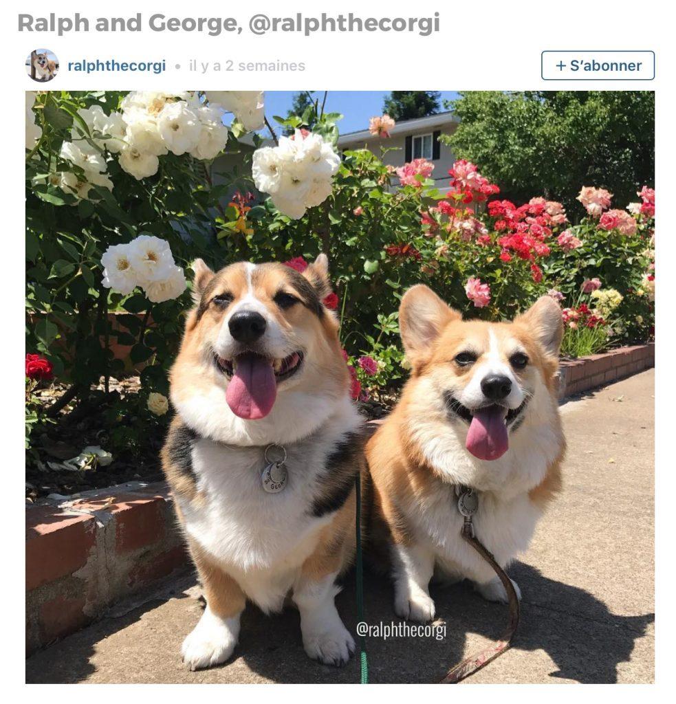 Animaux sur Instagram: Ralph et George