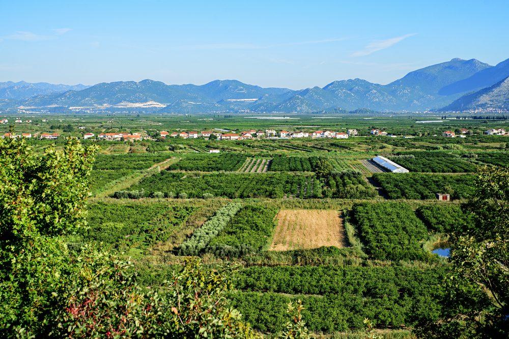 Le passé dans l'Empire romain de la Croatie se faire sentir dans sa longue tradition vinicole, surtout depuis que le pays s'est émancipé des vins médiocres de l'ère soviétique.