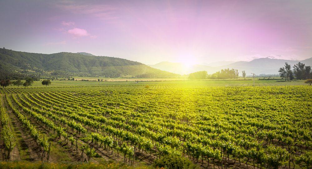 Le Chili est l'un des plus gros importateurs de vin à travers le monde. Du nord au sud du pays, les vallées de vignobles s'étendent à perte de vue.