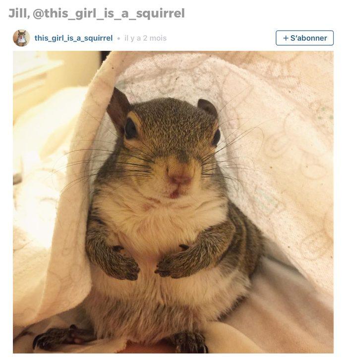 Animaux sur Instagram: Jill l'écureuil