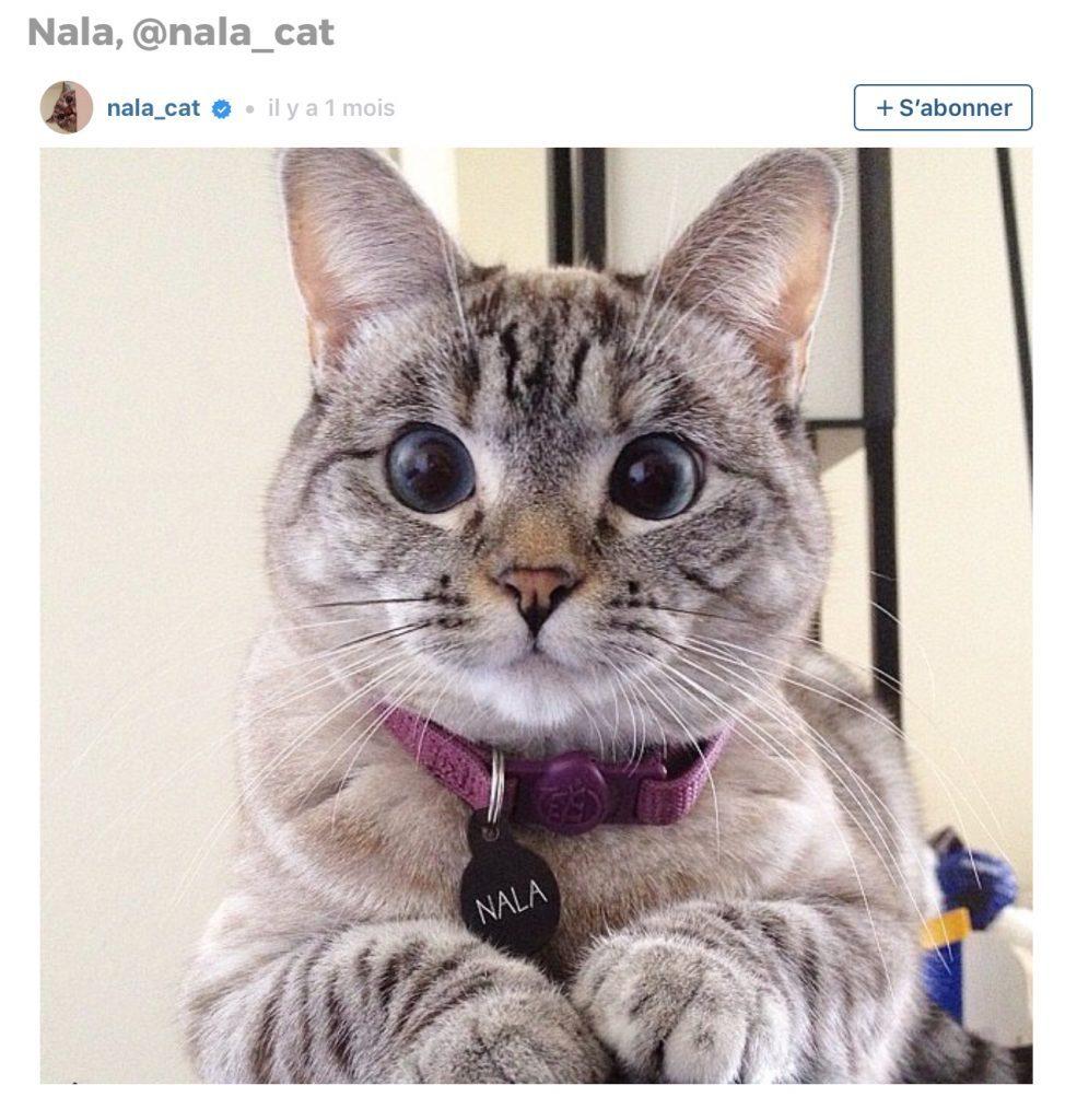 Animaux sur Instagram: Nala le chat