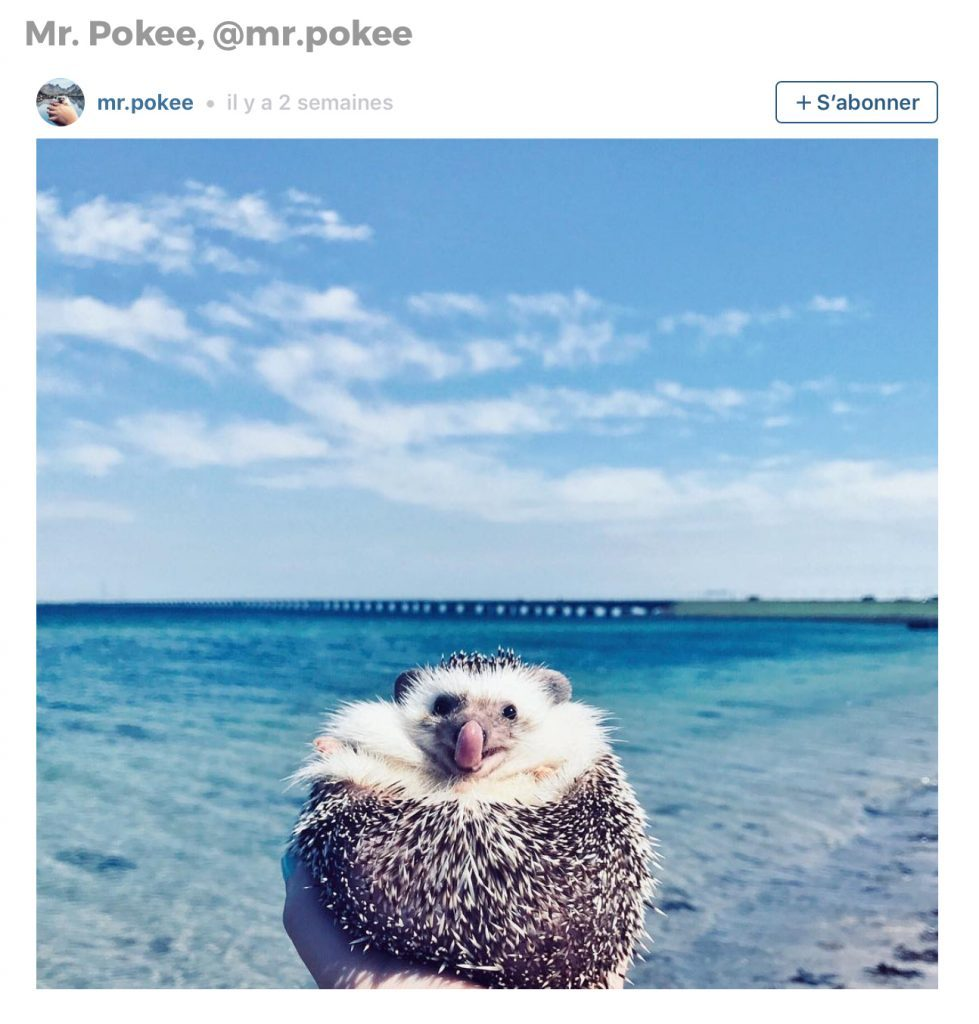 Animaux sur Instagram: Mr. Pokee le hérisson