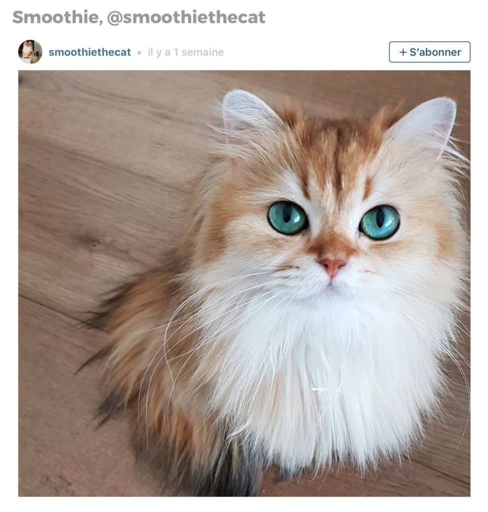 Animaux sur Instagram: Smoothie le chat