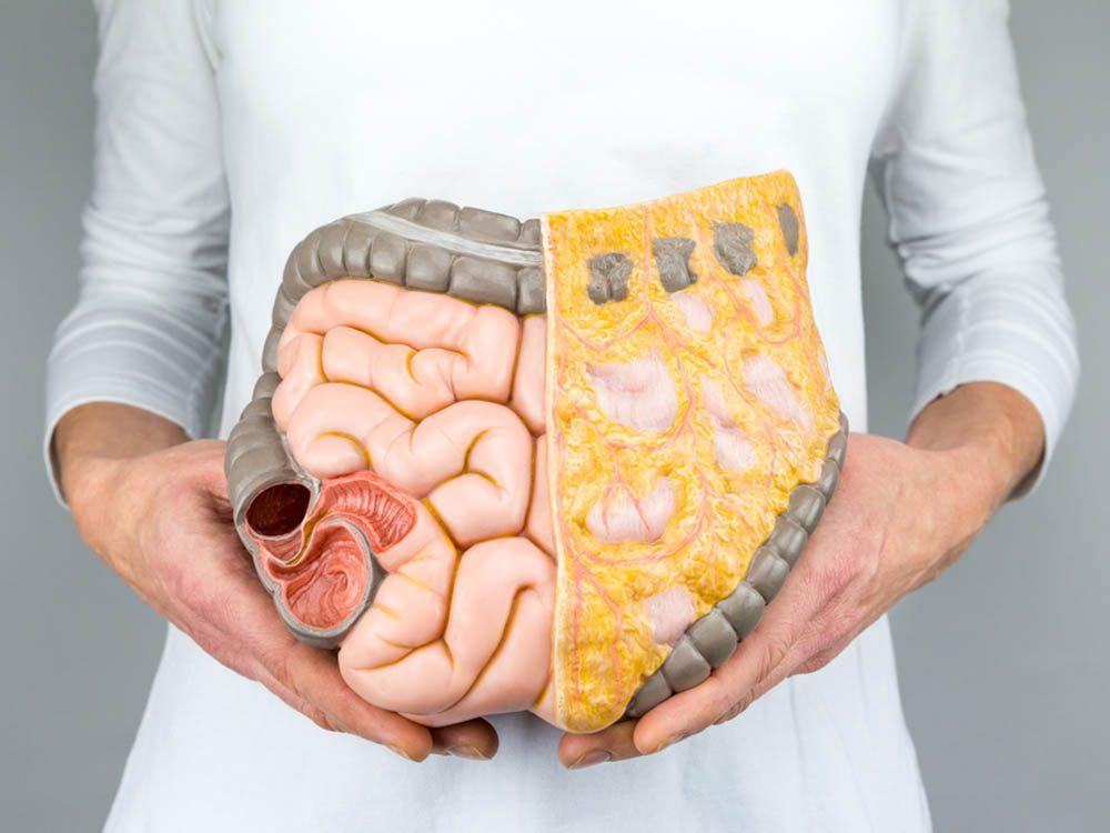 Durant la quarantaine, entretenez des bactéries intestinales diversifiées.