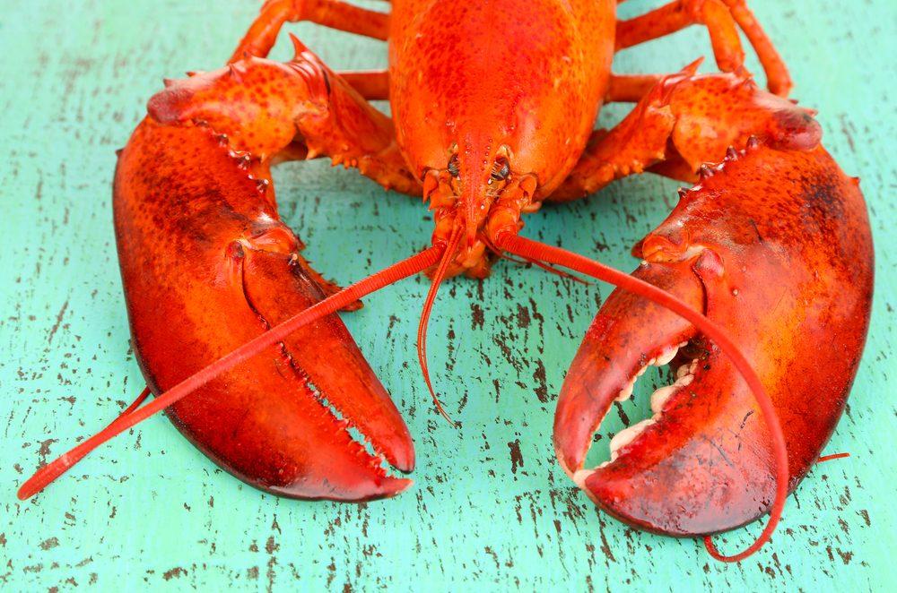 Mis à part l'albinos, les homards deviendront rouge une fois cuits, car seule la pigmentation rougeâtre de l'astaxanthine résiste à la chaleur.