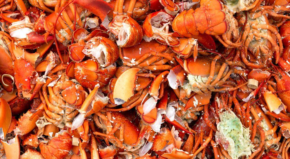 La carapace du homard n'étant pas extensible, il doit la changer à mesure qu'il grandit.