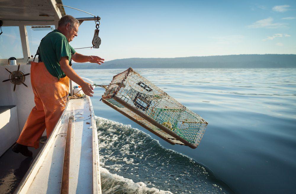 Les pêcheurs luttent contre la surpêche des homards.