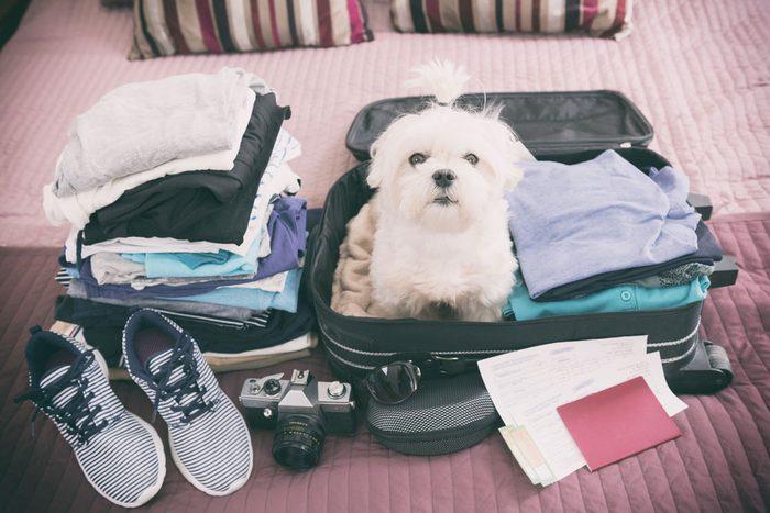 Vous allez en voyage.