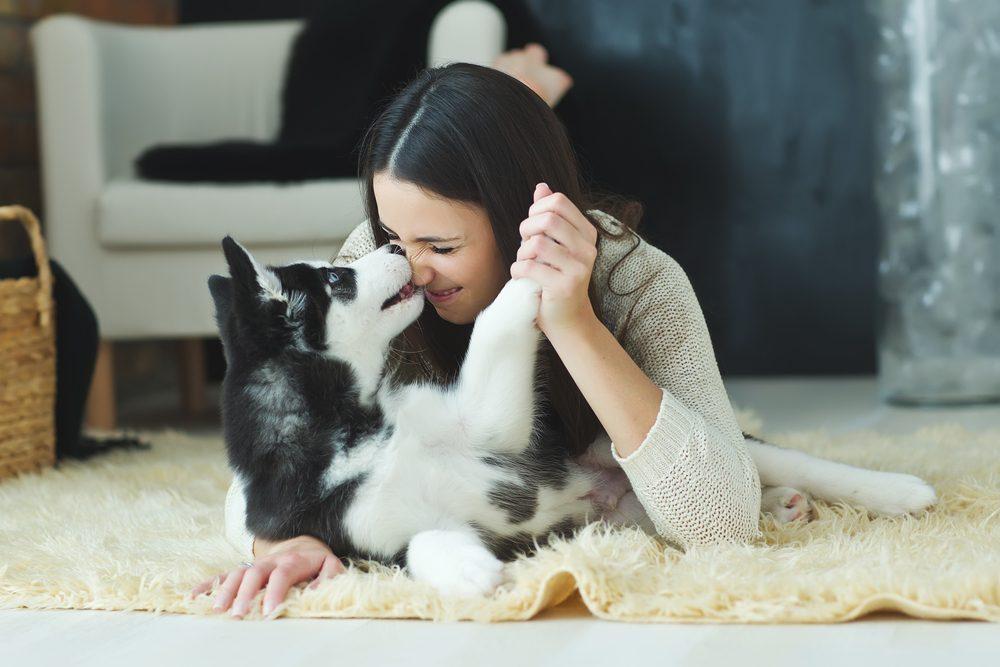 Les chiens peuvent savoir si une personne est généreuse ou non.