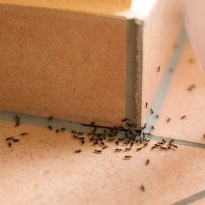 Éliminez les fourmis avec du borax.
