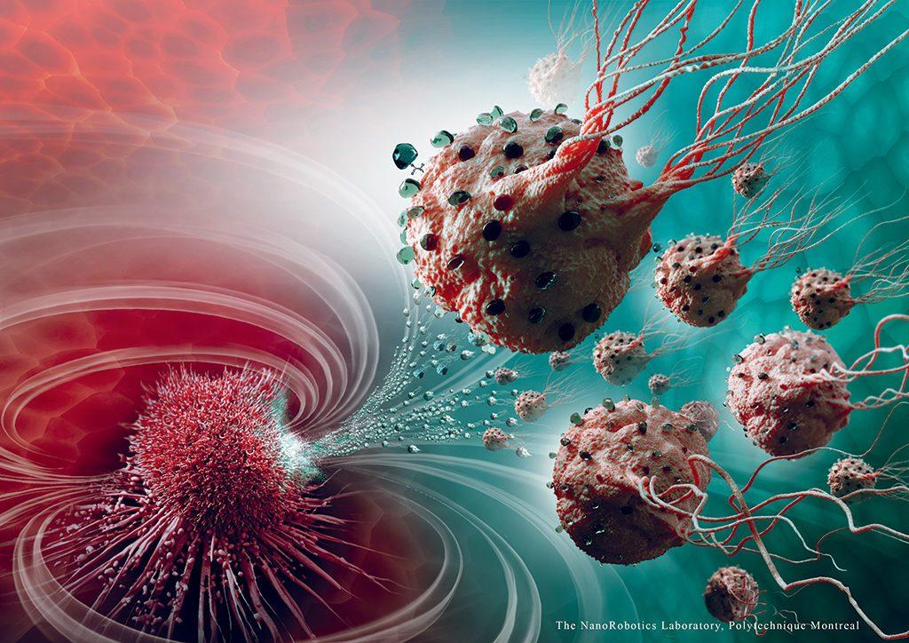 Des bactéries Magnetococcus marinus