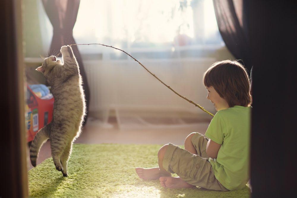 Les chats peuvent apprendre quelques trucs