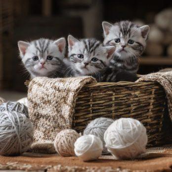 13 faits amusants sur les chats