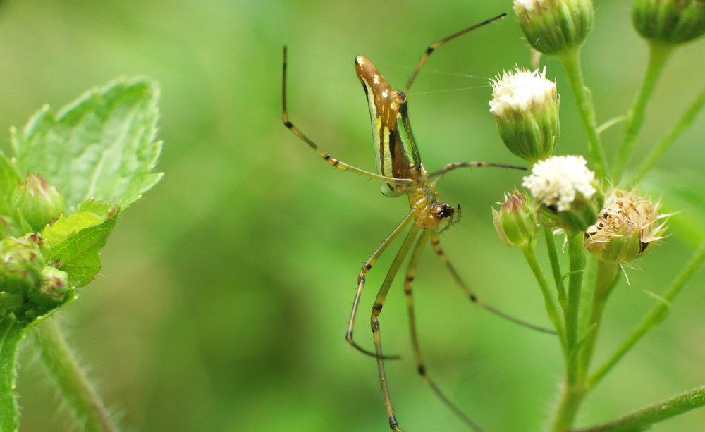 Superstitions: araignée qui annonce le printemps
