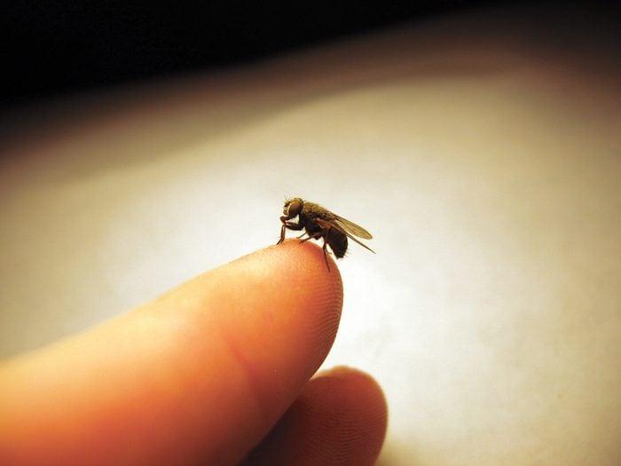 Superstitions: mouche signe de prospérité