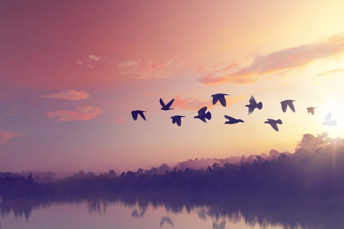 Superstitions: les oiseaux annoncent beaucoup de signes