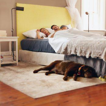 Dormir avec son chien : bon pour votre sommeil