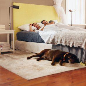 Dormir avec son chien serait bénéfique.