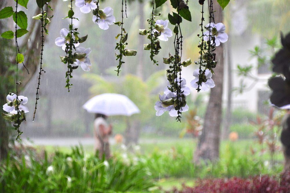 Marcher sous la pluie a quelque chose qui est à la fois apaisant et excitant.