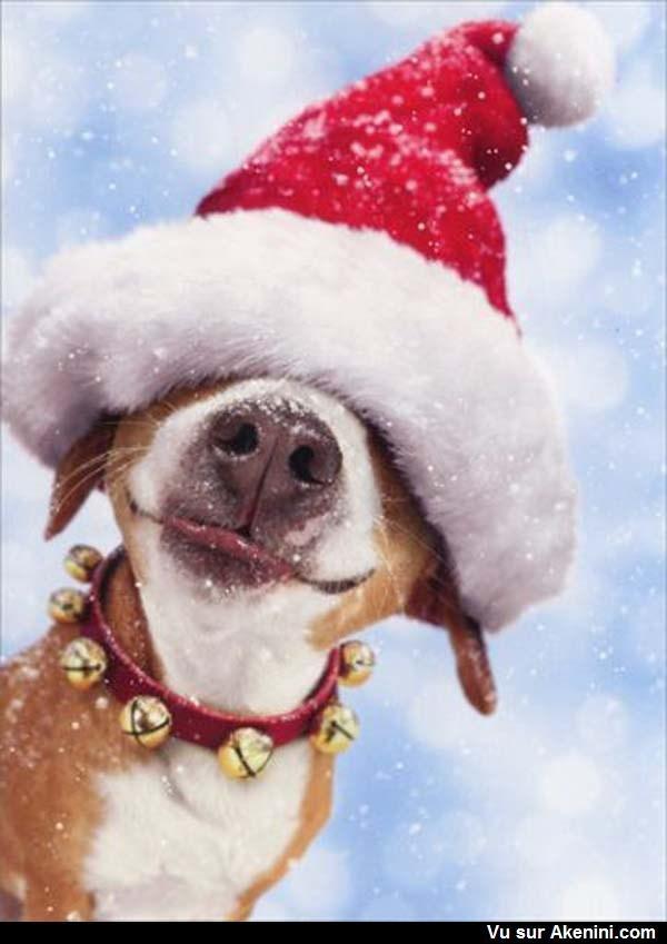 Ce chien a peut-être peur du Père Noël.