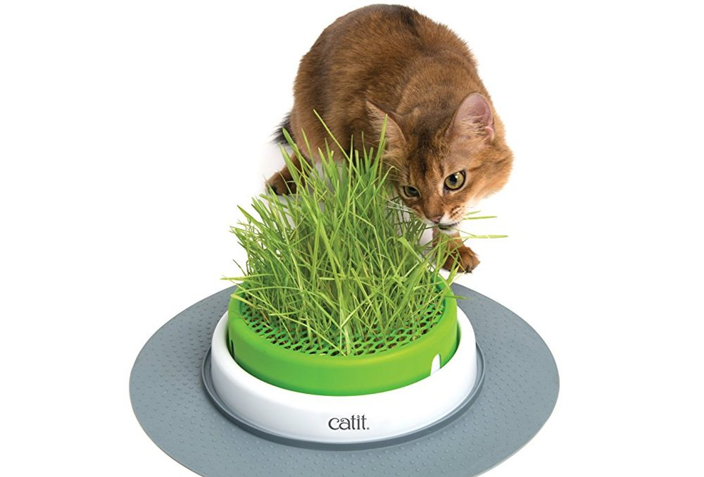 Ce pot permet de faire pousser de l'herbe à chat.