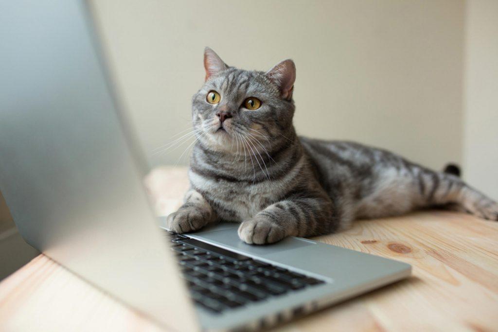 Regardez des vidéos de chats