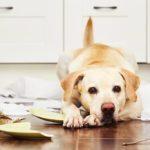 7 raisons imprévisibles qui pourraient rendre votre chien anxieux