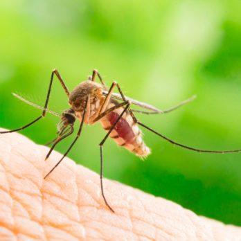 Vacances : ne ramenez pas le virus Zika