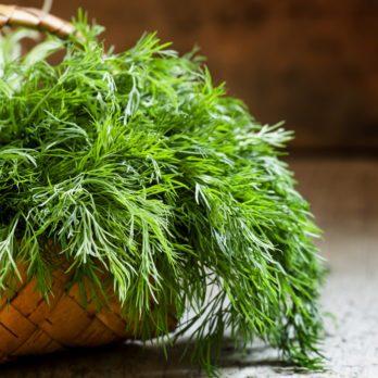Santé : 6 fines herbes qui soulagent